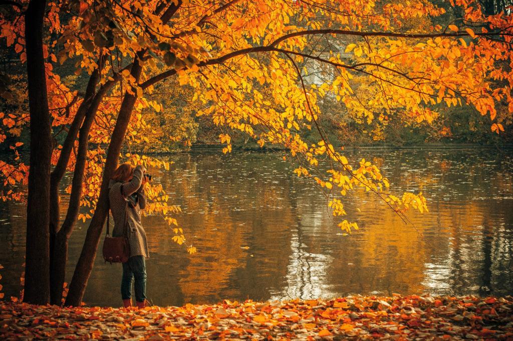 autumn-691263