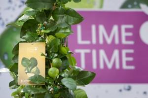 lime time_32kaffir