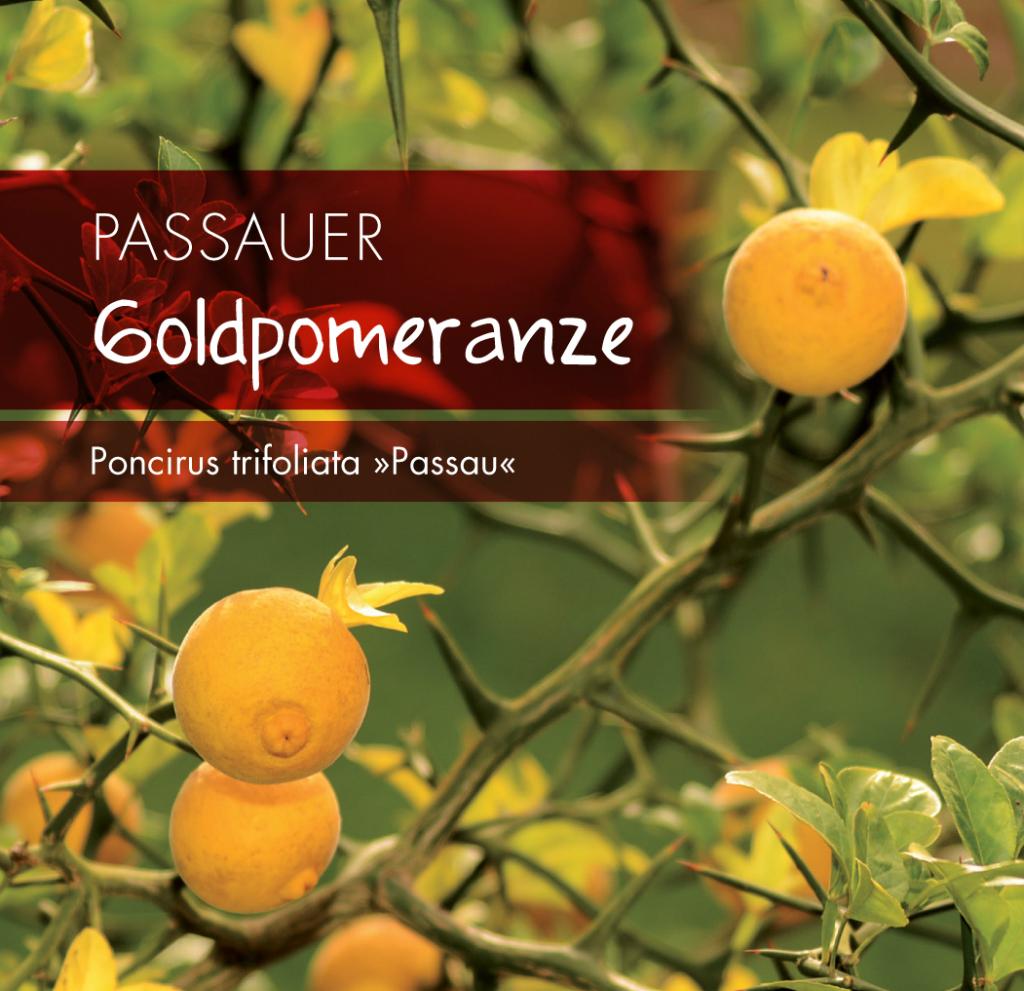 Goldpomeranze_KORR1_RZ_NEU_KORR.indd
